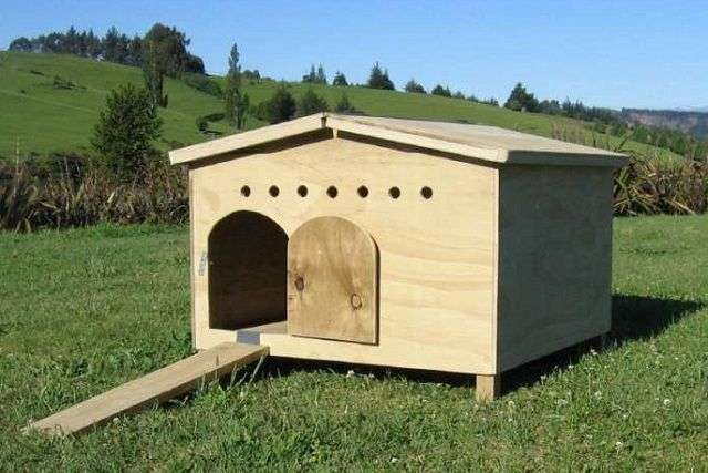 Як побудувати пташник для качок своїми руками